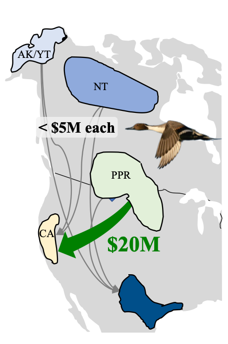 pintail spatial subsidy map